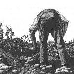 3_acresandacow_man-digging-potatoes-no-border