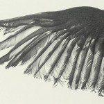 RebeccaClark_Wing.detail