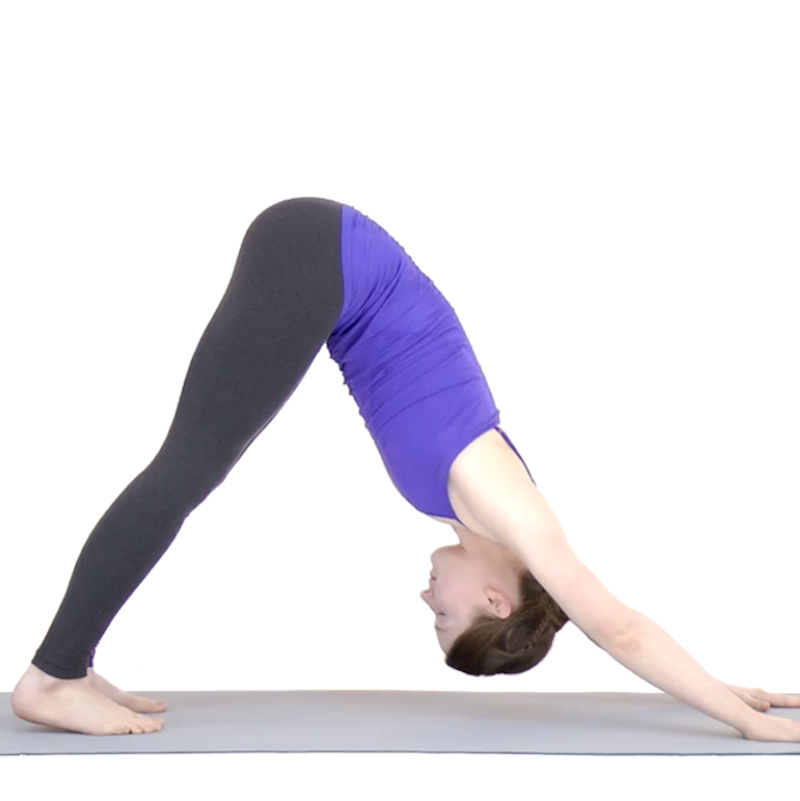 A person doing the Downwards Dog Yoga position infant of a white background. They're wearing a purple top and black leggings.