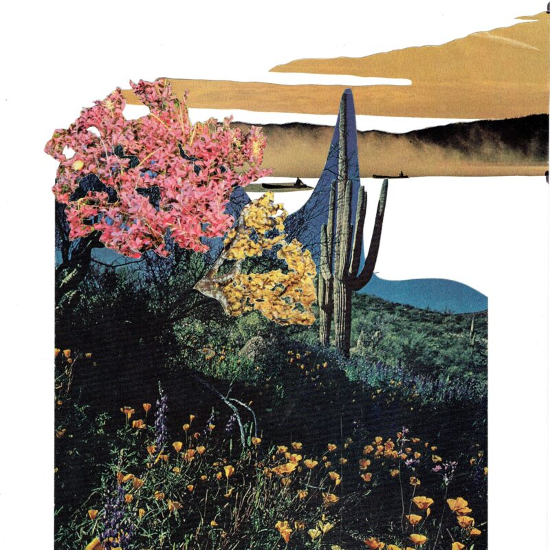 Collage of photos of natural landscapes and trawler boats. All the images are heightened in colour and the majority is made up of a dark green / black field with yellow flowers a cactus in the centre. To the left of this is a large pink and a large yellow blossom tree. Above this are 2 sepia swaithing landscapes with minimal detail other than 2 tiny black trawler boats.